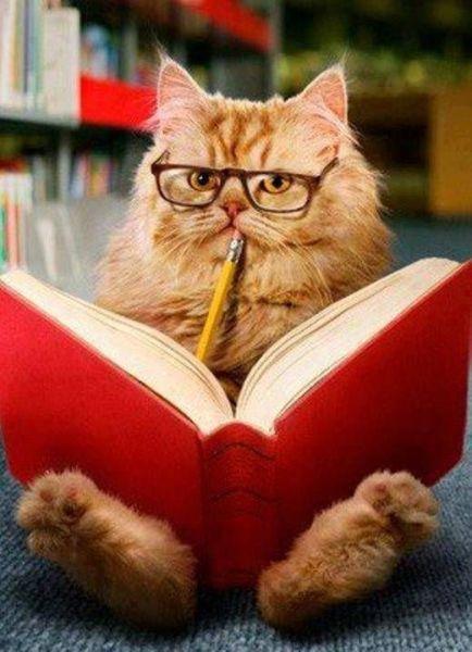 deb773bb59015df6035ce347608302cd--reading-books-kitty-cats